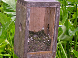 Prothonotary Warblet Nest
