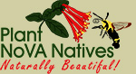 Plant NoVA Natives