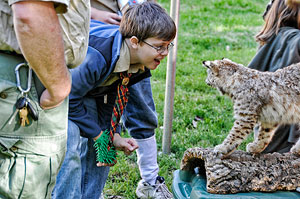 Wow it's a Bobcat!