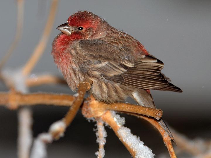 virginia backyard birds pictures 2017 2018 best cars reviews